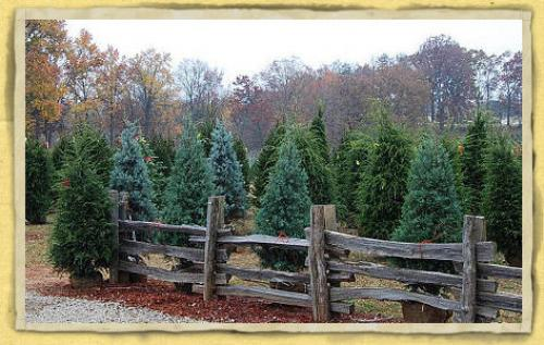 Best Christmas Tree Cutting Experiences In The Atlanta Area