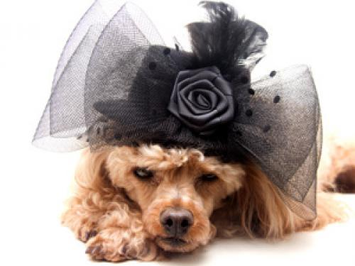 Best Clothing for Your Spoiled Pet in Atlanta