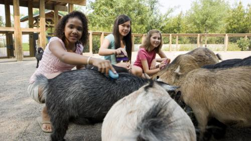 Best Petting Zoos In The Atlanta Area