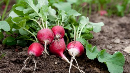 5 Fall Fruits & Veggies To Plant As Summer Winds Down